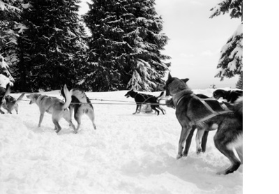 Snow dogs, Vancouver