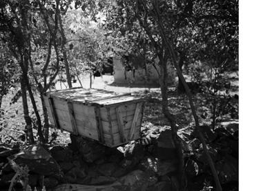 The Beekeeper, Masvingo