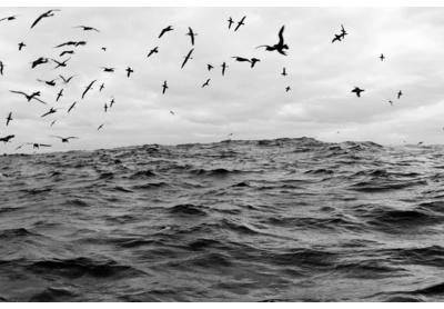 Sea birds, Cape Point