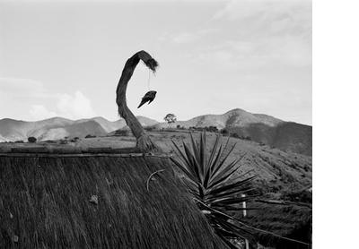Little bird, Oaxaca