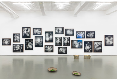 WHITENESS ETHNOGRAPHY [installation view]