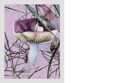 Russula Coerulea