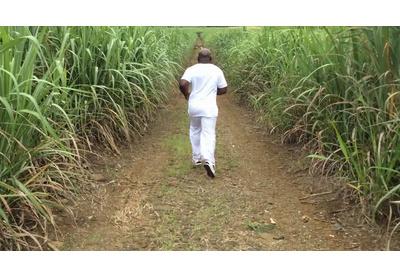 Sugar Cane Sweat